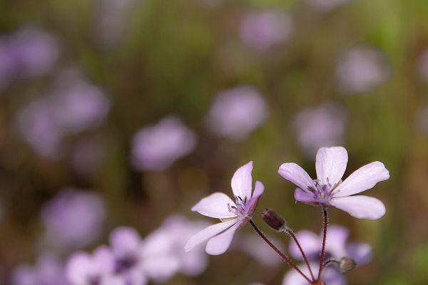 dourointernacional flor