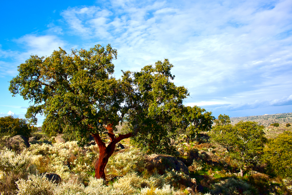 dourointernacional árvore