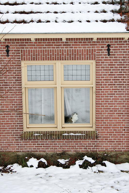 holanda inverno neve ameide gato janela