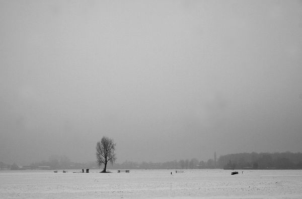 holanda ameide inverno neve arvore