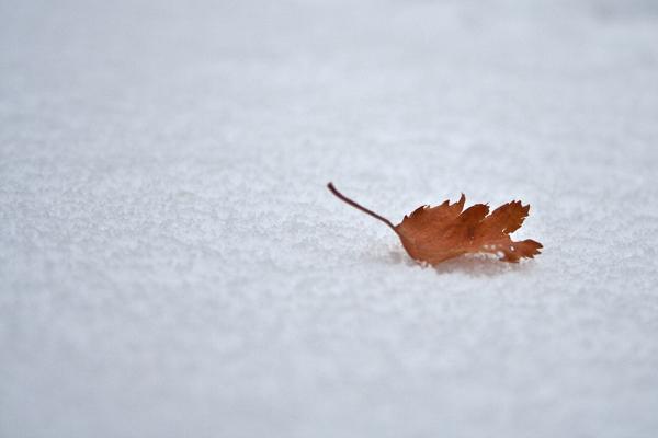 neve inverno folhas serraestrela covãodaametade