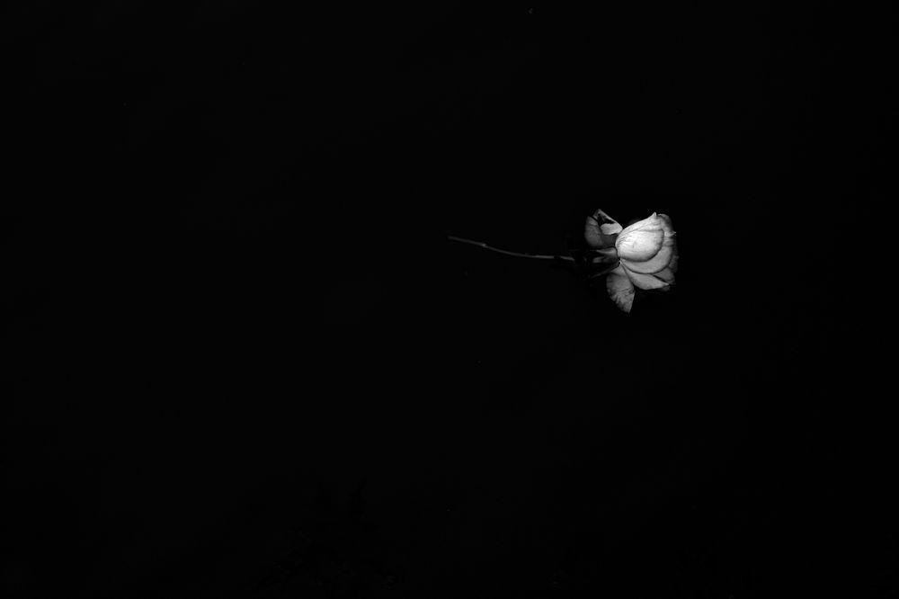 AVEIRO flor