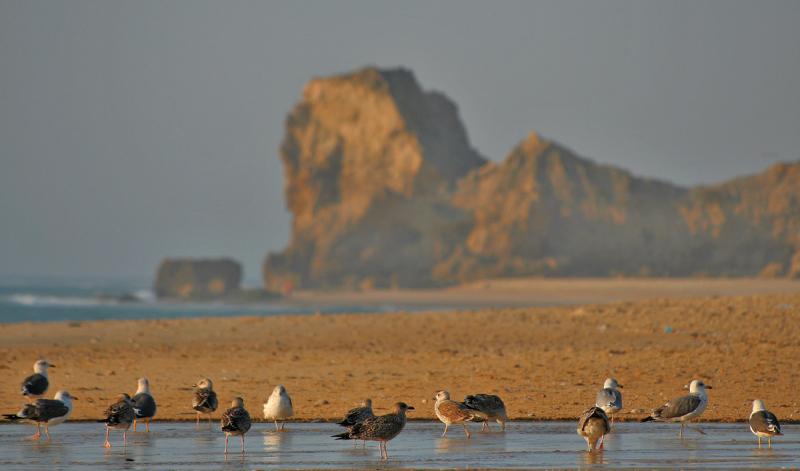 mar gaivota praia paredesdavitoria