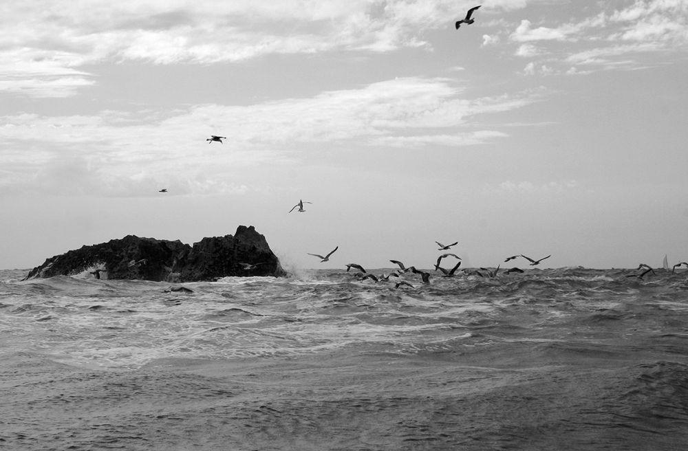 nazaré mar gaivota