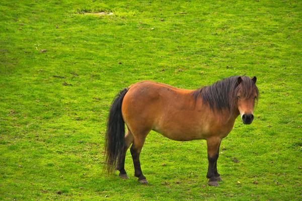 holanda Kinderdijk cavalo