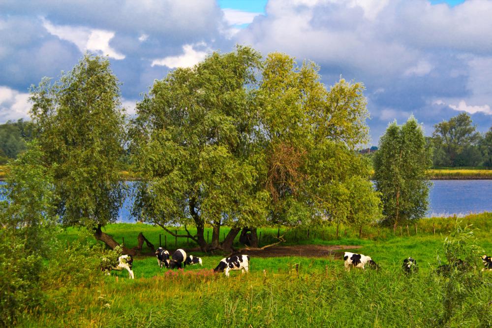 Holanda ameide rio Lek
