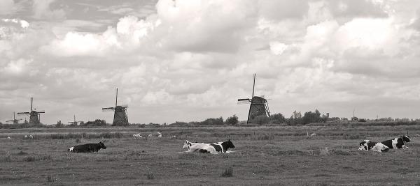 holanda kinderdike moinho vaca