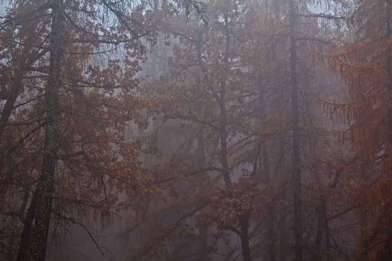 serraestrela nevoeiro outono