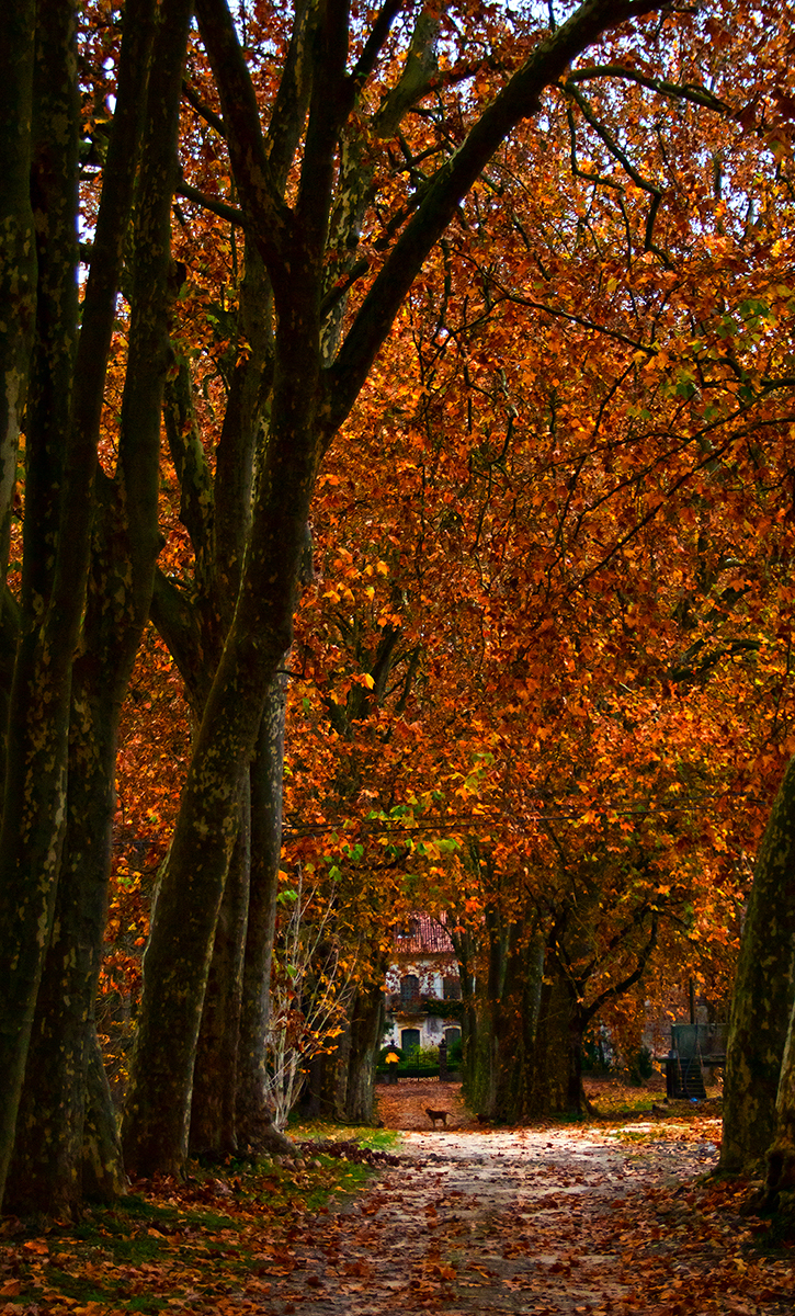 outono leiria