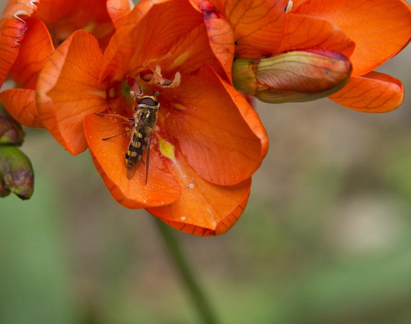 insecto flor coimbra