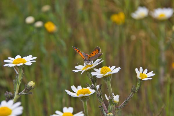 borboleta alentejo