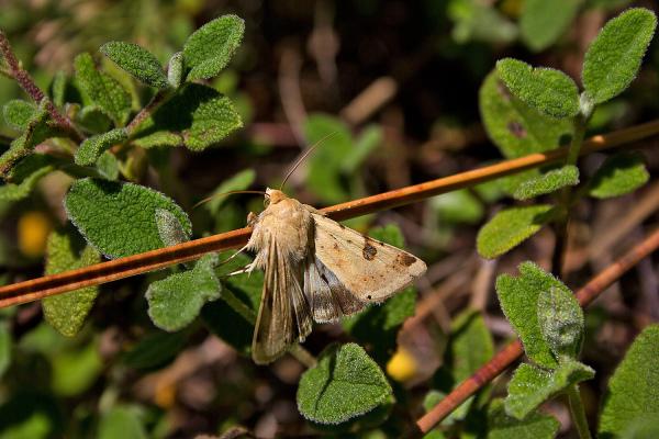 borboleta salgado