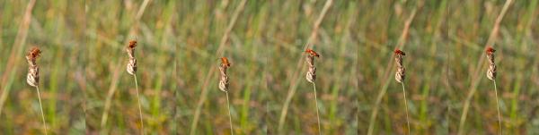 insecto coleoptero serra-montejunto