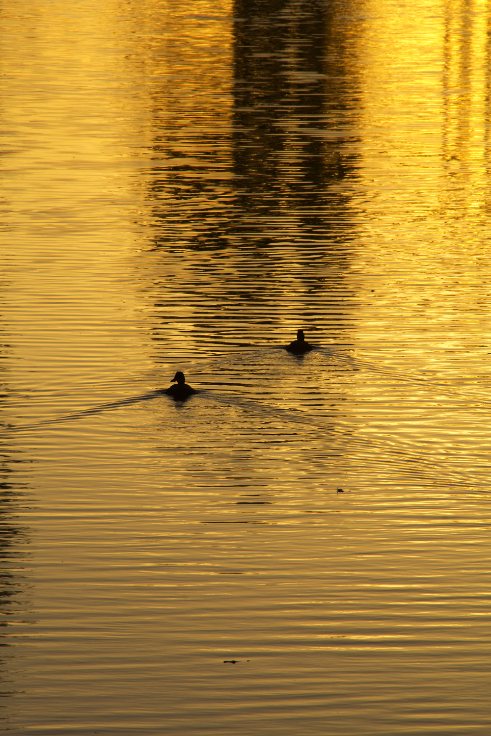 sunset patos leiria