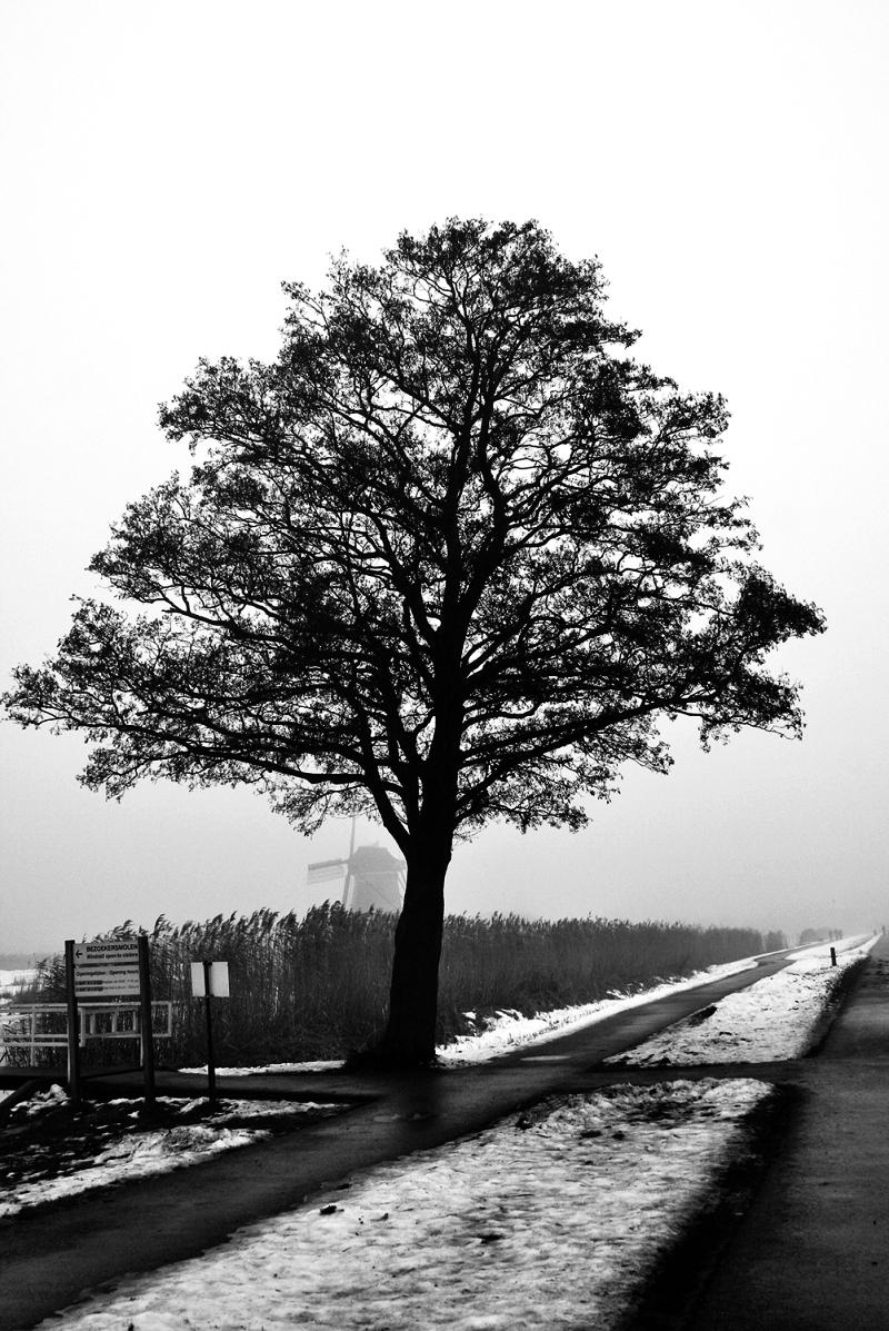 holanda kinderdike moinho neve inverno nevoeiro