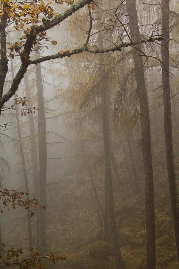 serraestrela nevoeiro outono manteigas