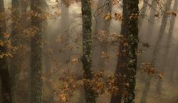 Uma névoa de Outono