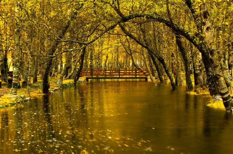 serraestrela outono covãodaametade nevoeiro