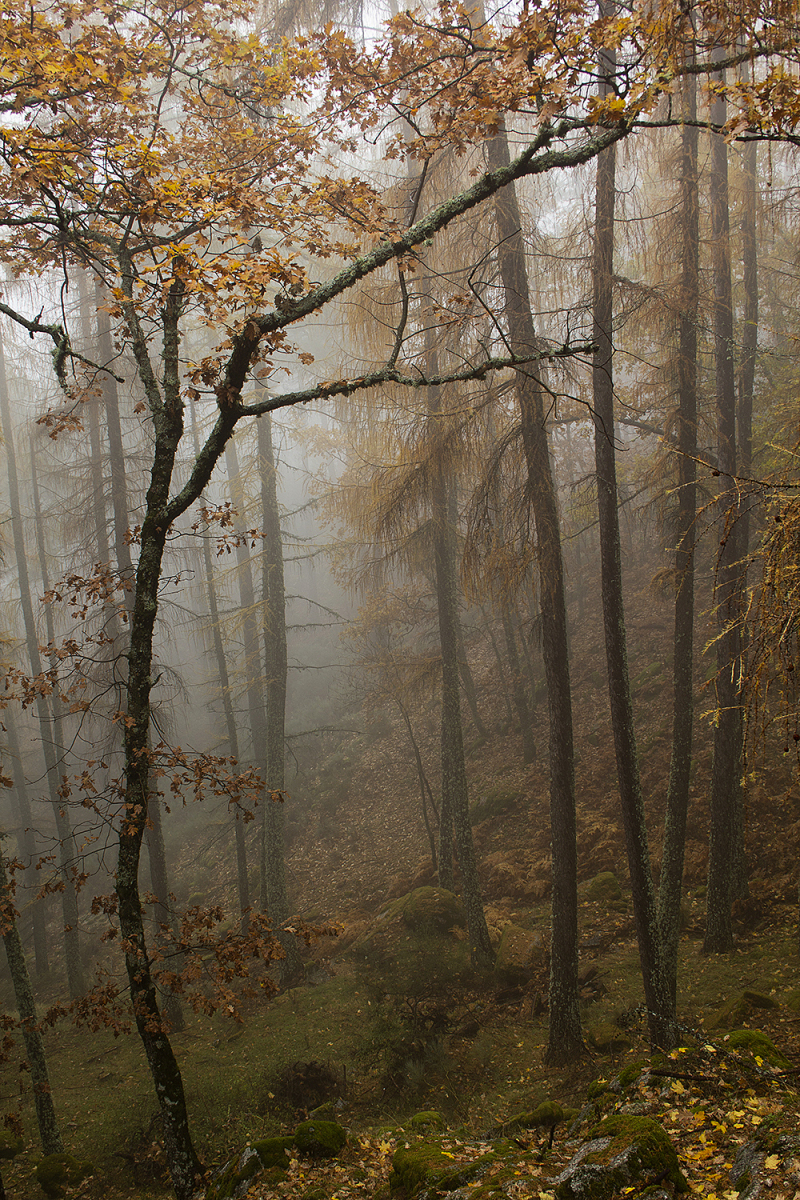 serraestrela outono manteigas nevoeiro