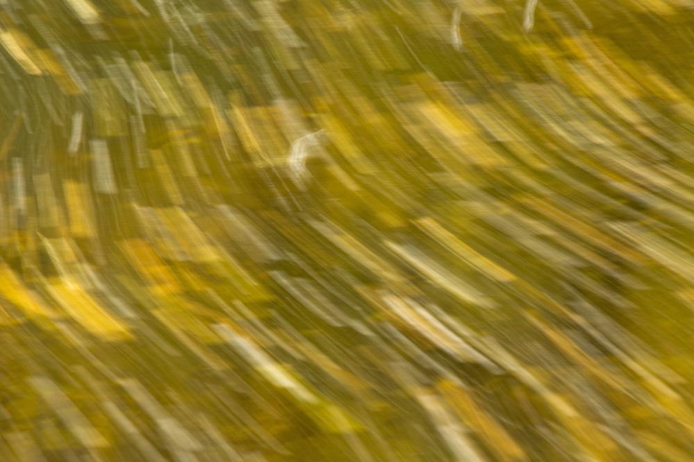 serraestrela outono covão-da-ametade folhas