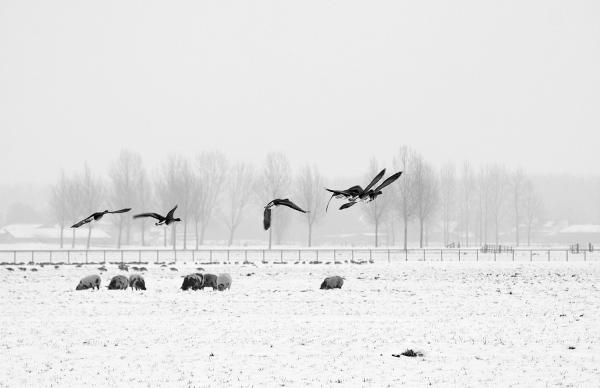 holanda ameide patos inverno