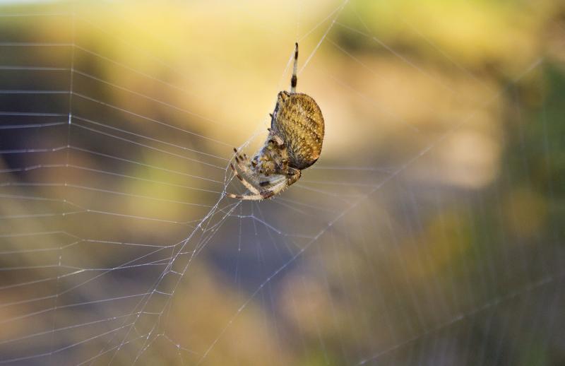 lousã aranha teia