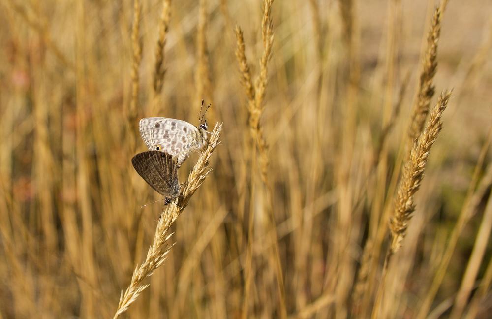 lousã borboleta
