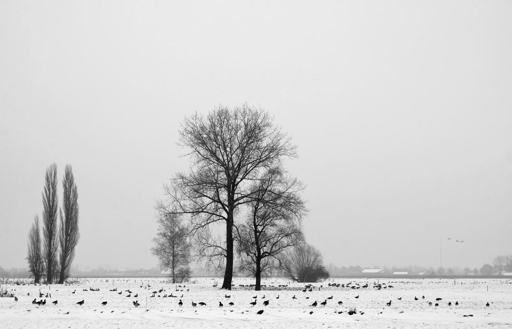 holanda ameide árvore inverno neve