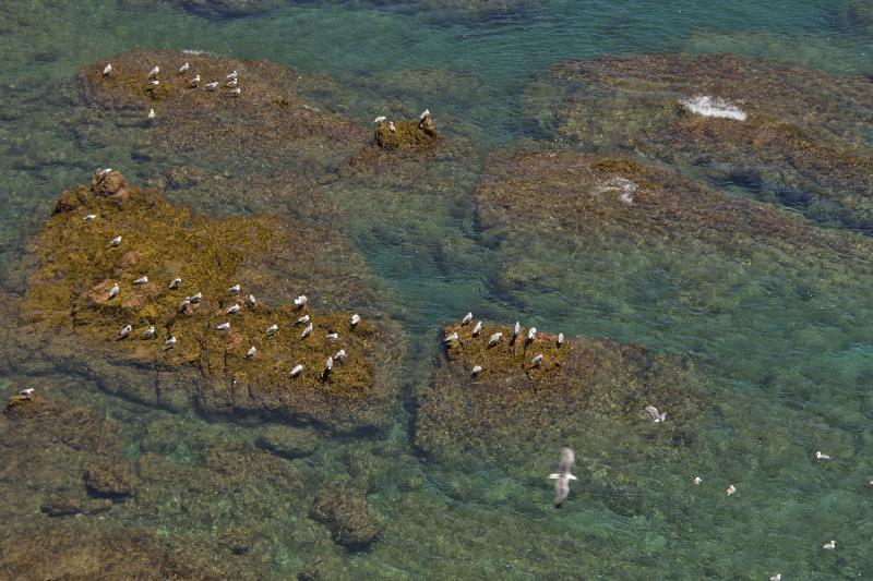 berlengas mar verão gaivota