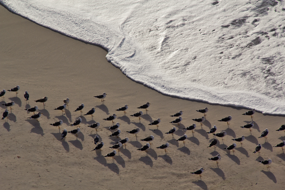 praia paredesdavitória gaivota