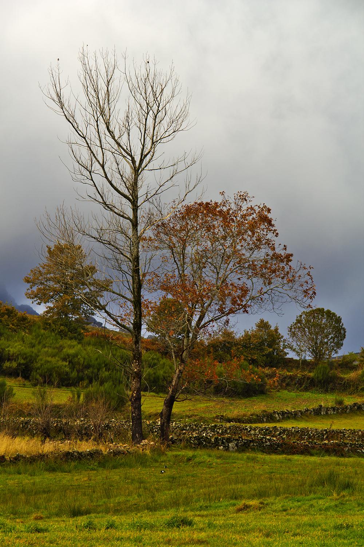 peneda-gerês pitões-das-júnias outono