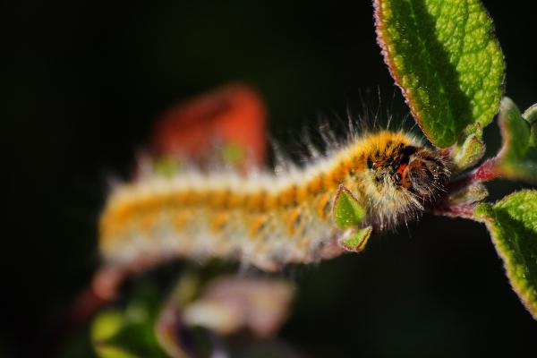 borboleta lagarta salgado