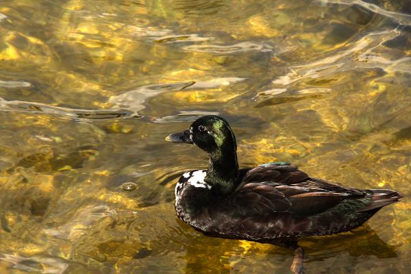 patos coimbra rio mondego