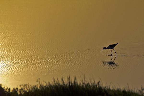 ria-de-aveiro Perna-longa sunset