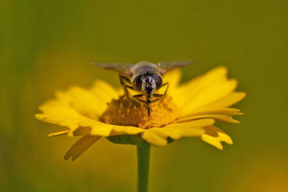 ria-de-aveiro inscto abelha salreu