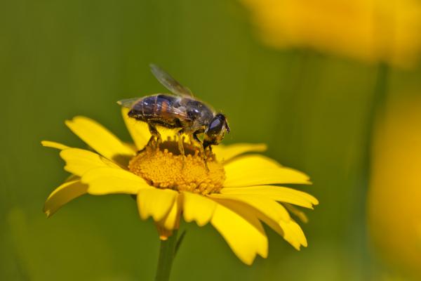 ria-de-aveiro insecto abelha salreu