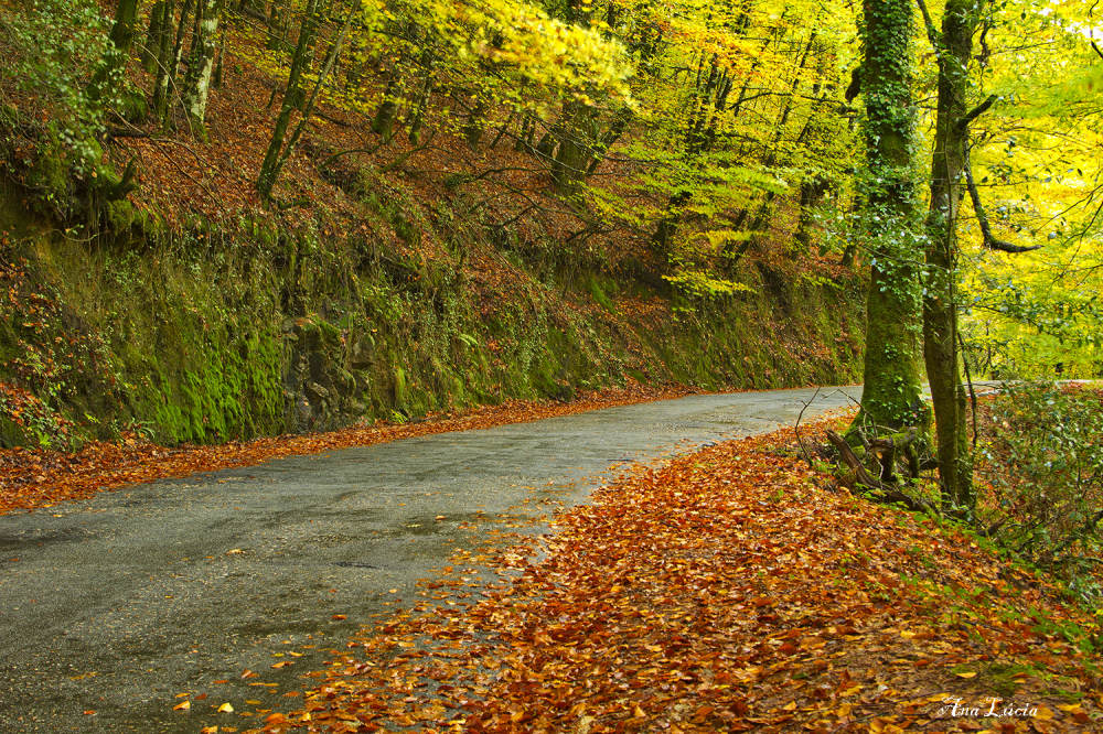 peneda-gerês outono caminho