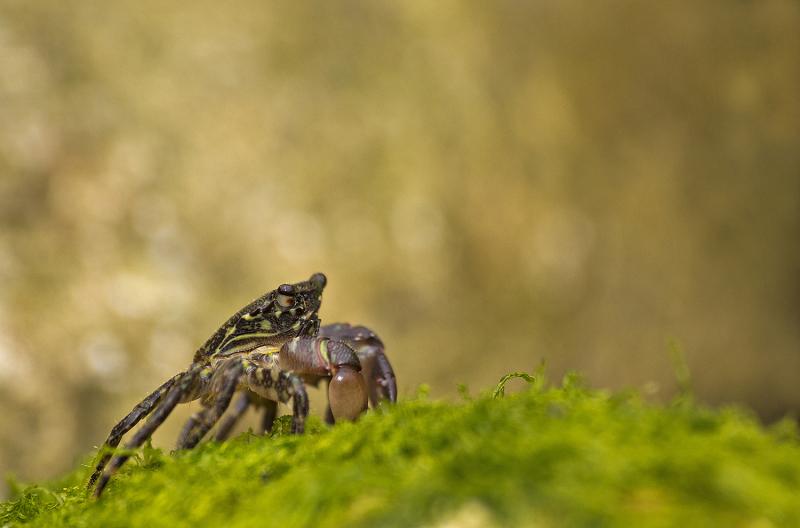 caranguejo peniche