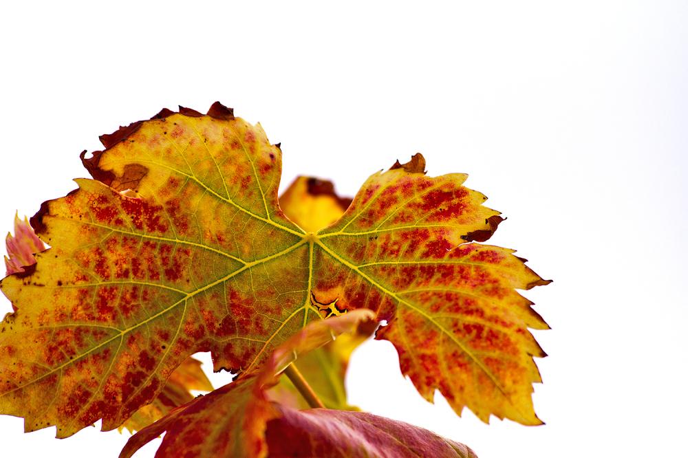 outono folhas