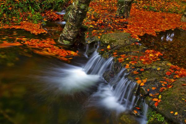 peneda-geres outono mata-da-albergaria