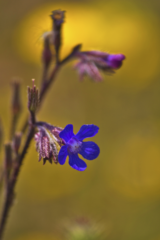 pnsac primavera flor