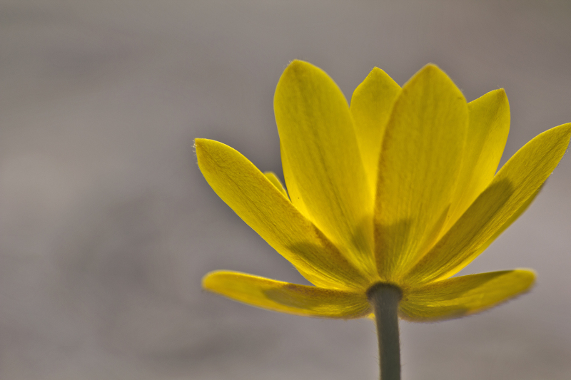 pnsac primavera flor amarelo