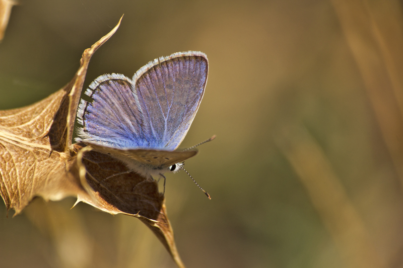 pnsac primavera borboleta