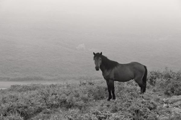peneda-gerês cavalo garrano