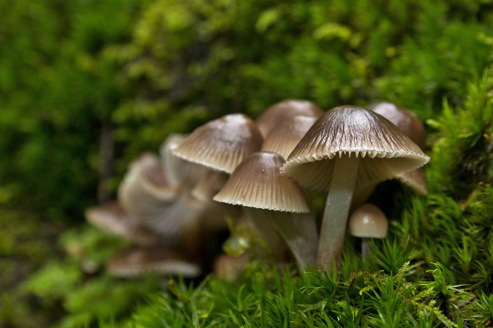cogumelo peneda-geres
