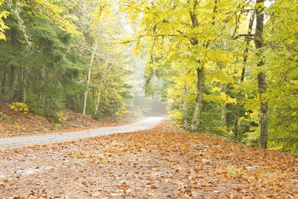 serraestrela  arvore outono caminho