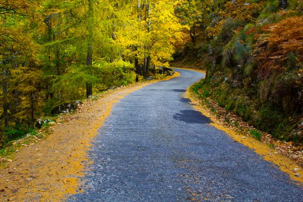 serraestrela arvore outono manteigas caminho