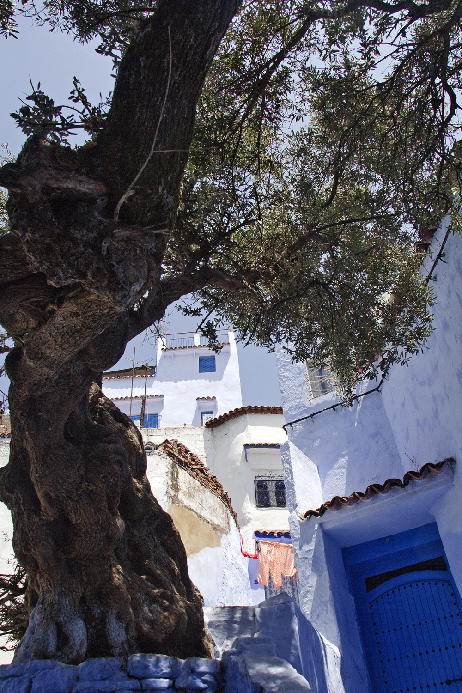 marrocos medina Chefchaouen arvore