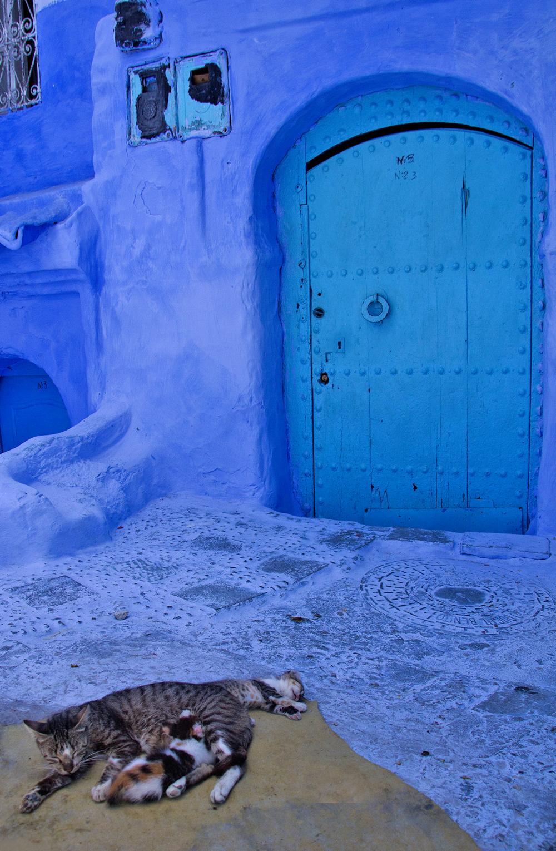 marrocos medina Chefchaouen gato porta