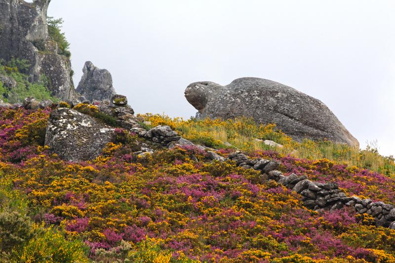peneda-gerês flor rocha